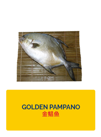 Wei Wei Golden Pampano
